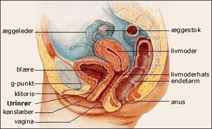 www escort guide abdominale smerter under samleje